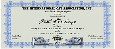TICA RW, QGC/IC Yellicle's Medley of Silverdance