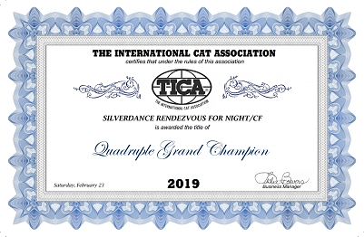 TICA QGC/IC Silverdance Rendezvous For Night